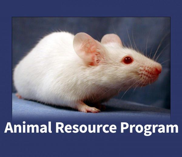Lab Mouse - Animal Resource Program Homepage link