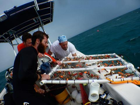 Picture of Rich and two other mean with a net of coral